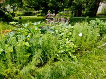 Botanischer Garten Großpösna